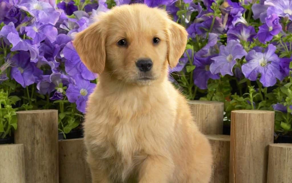 When Should I Take My Puppy To The Vet 1