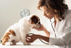 When Should I Take My Puppy To The Vet