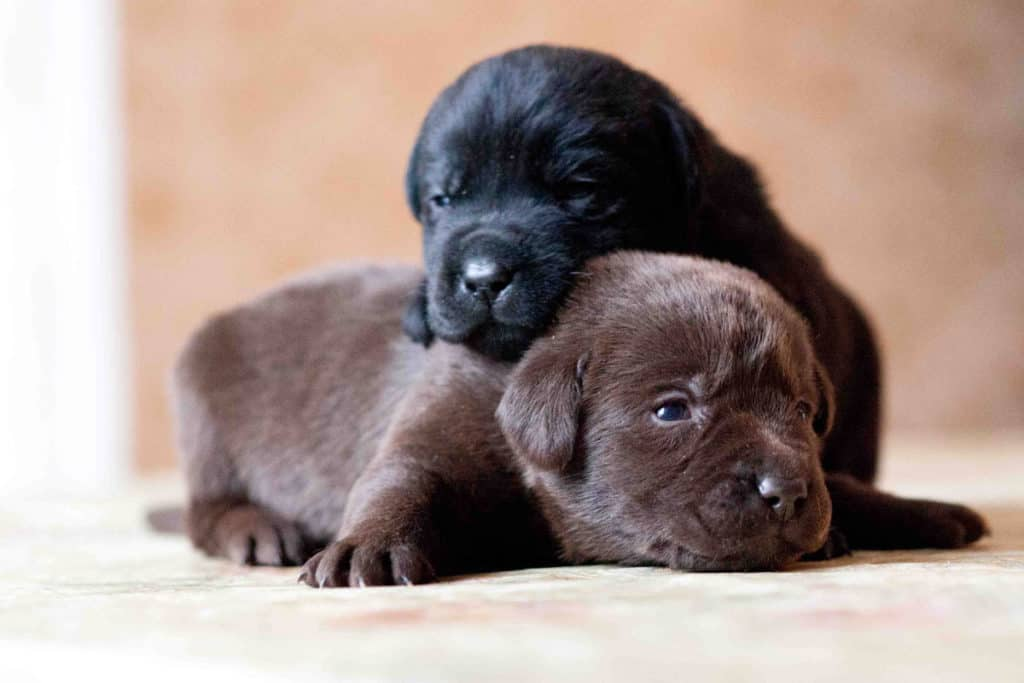 What to look for when buying a puppy? 4