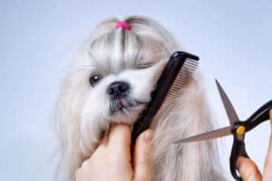 Dog Grooming At Home. Some Tips For Beginners. 3