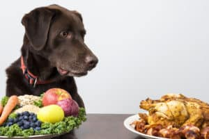 can i feed my dog chicken everyday, is chicken good for dogs