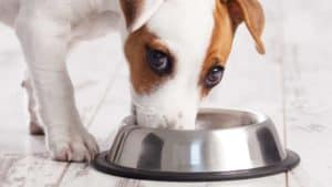 can dog eat rice, boil chicken and rice for dogs