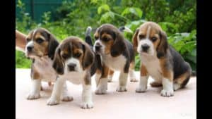 what to look for when buying a puppy, buying a dog, questions to ask when buying a puppy