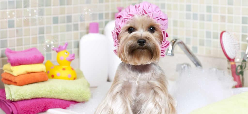 Dog Grooming At Home. Some Tips For Beginners. 4