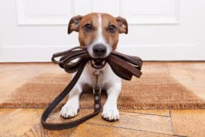 How to train a dog to come when called