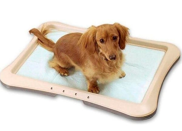 How to train a dog to pee on the pad 5