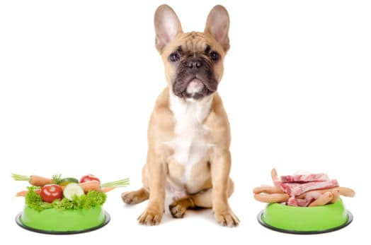 Top 9 Tricks How To Get a Puppy To Eat 3