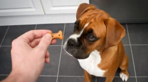 how to get a puppy to eat