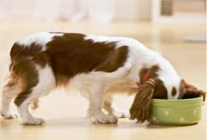 how to get my puppy to eat