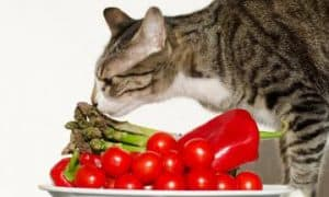 Kidney beans can cats eat