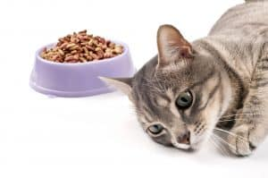 Cat throwing up food but acting normal