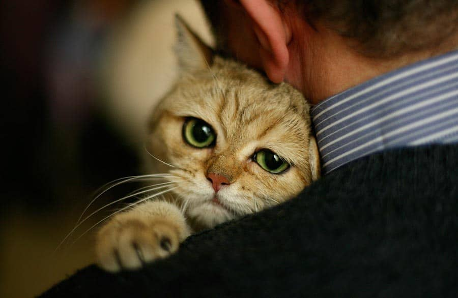 Do Cats Remember Their Owners After Being Separated